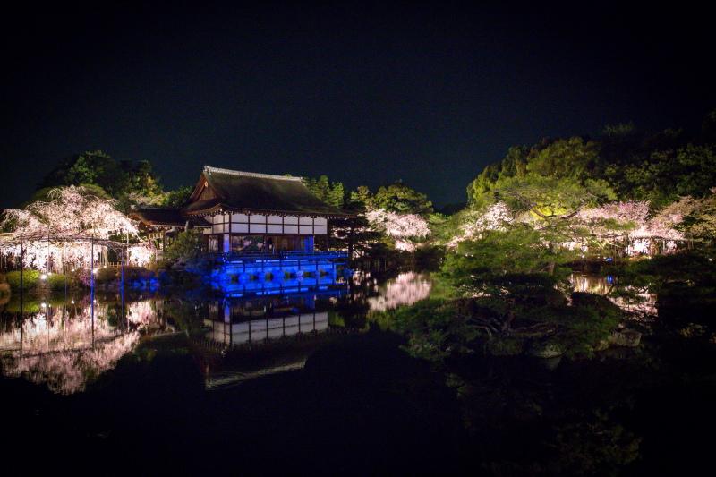 ﹝京都夜櫻﹞平安神宮:紅枝垂櫻音樂會一年只有四場,日本人也瘋狂買票入宴